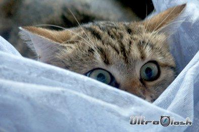 Прикольные Фотки кошек