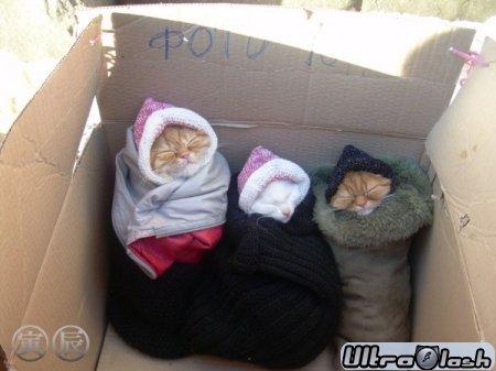 Фото котят и кошек пак (350шт)